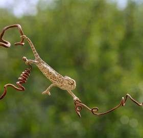 chameleon in his elegance