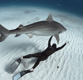 diver who swims with sharks