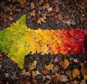 spectrum of autumn