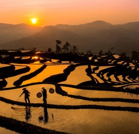 susnet over rice field, china
