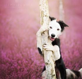 Border Collie Loves Nature