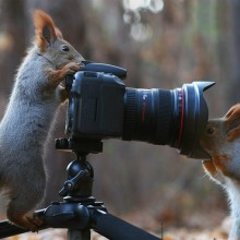 Squirrel Photographers