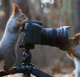 Squirrel Photographers