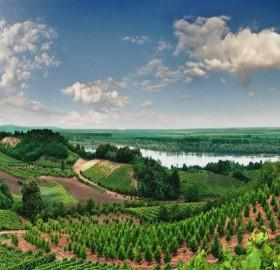 Vineyards of Vojvodina, Serbia