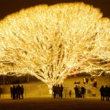 A Tree With 1,000 Lights, Draper City, Utah