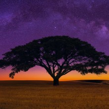 African Savannah Tree