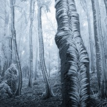 Frost Blankets Over Trees in Forest