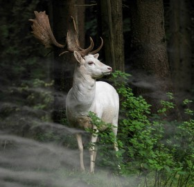 Rare White Fallow Deer Spotted in Germay Forest