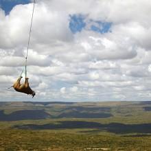 Black Rhino Transportation, South Africa