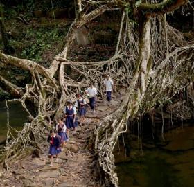 Tree Root Bridge, India