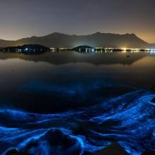 Blue Glowing Sea Phenomenon, Hong Kong