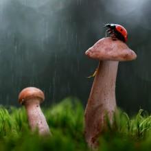 Ladybug On The Rain
