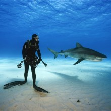 Epic Shark Diving, Bahamas