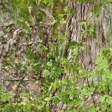 Expert Camouflaged Hunter