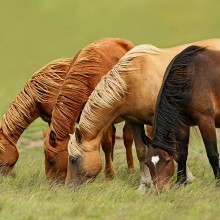 Horses In The Wind