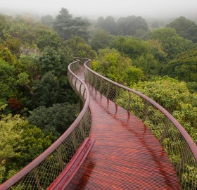 Walkway Above Trees, South Africa