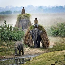 Farmers Ride Their Elephants In India
