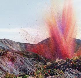 Flower Petal Explosion Near The Irazú Volcano, Costa Rica