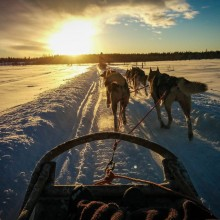 Husky Sledding Through Lapland, Finland