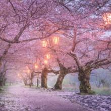 Osaka Fairy Tale, Japan