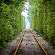 Tree Rail Tunnel, China