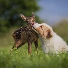 Adorable Friendship