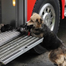 Dog Saving Her Puppies From A Fire, Chile