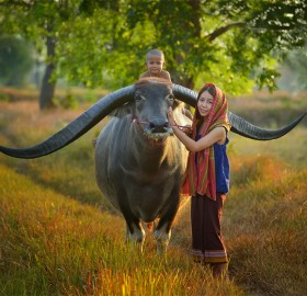 Farmer Family With Buffalo, Thailand