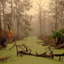 Louisiana Swampland
