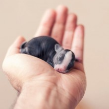 One Week Old Baby Bunny