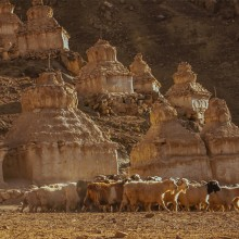 Shepherd Of Himalaya, India