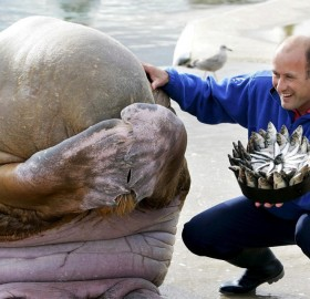 Birthday Surprise For Adorable Walrus