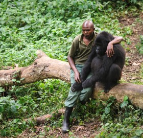 This Gorilla Had Just Lost Its Mother, Congo