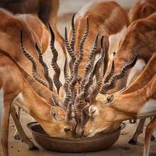 Bouquet Of Horns