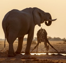 Elephant And Giraffe Sharing A Pond