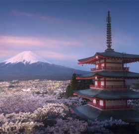 Sunrise Over Fully-Blooming Sakura Garden Under Bellow Mt. Fuji