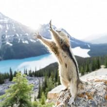 Stretching Squirrel Photobombing