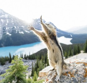 Stretching Squirrel Photobombing
