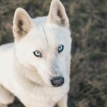 Dog With Beautiful Eyes